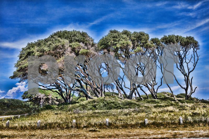 Ft Fisher Oak trees in color.jpg