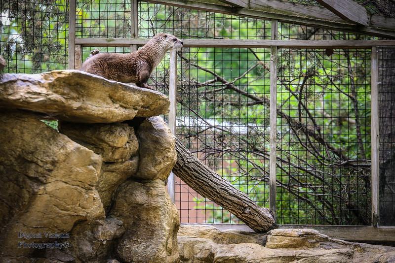 2016-07-17 Fort Wayne Zoo 754LR.jpg