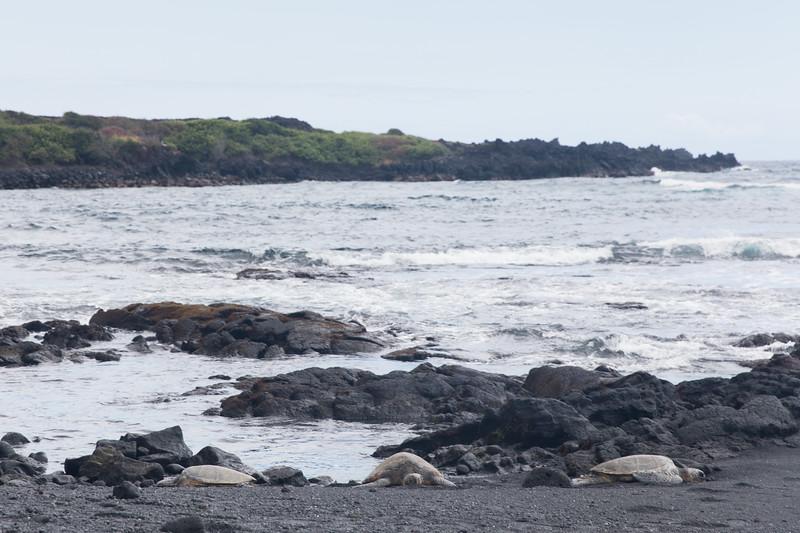 Punalu'u Black Sands Beach