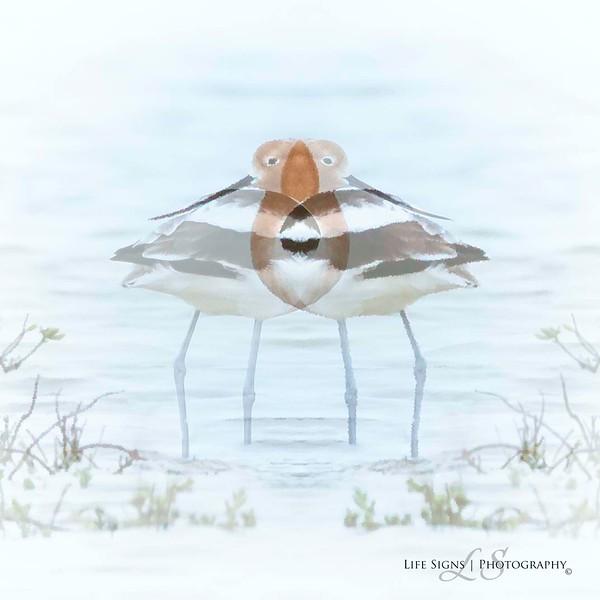 LS - Bird Art - Avocet Flower.jpg
