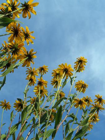 Summer Flower Extravaganza
