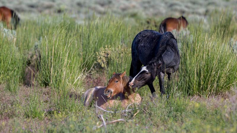 Wild Mustangs 2019-32.jpg