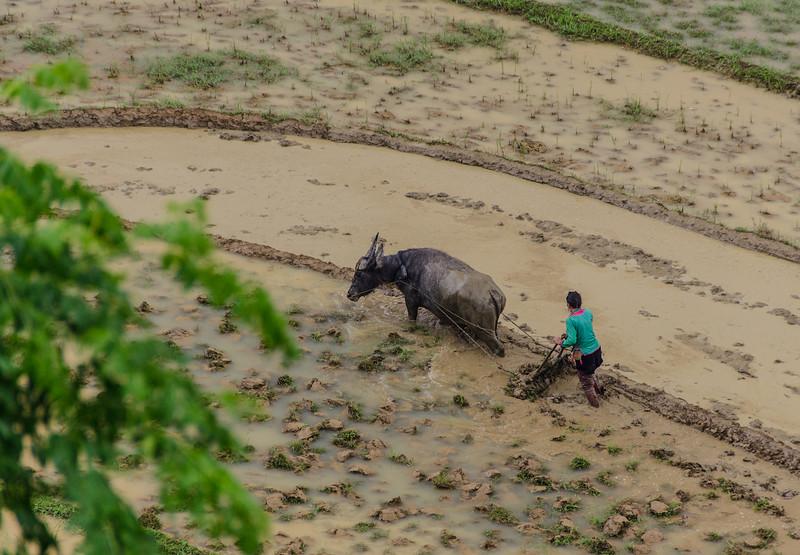 Vietnam.041.Sapa.jpg
