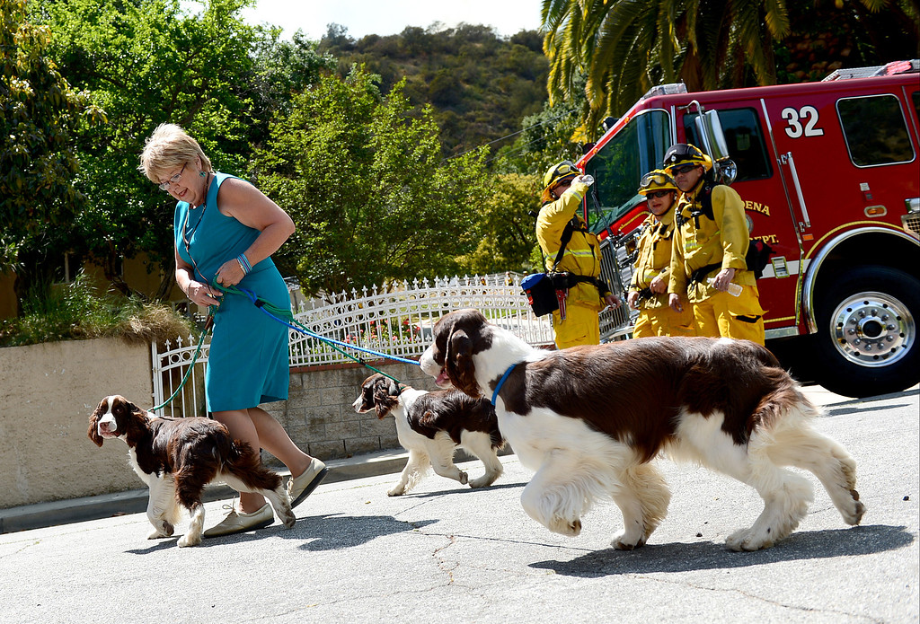 . Julie Kay evacuates her dogs from her Monrovia home on Highland Place as firefighters battle a fast spreading brush fire believed to have been sparked by gardening work on Madison Avenue Saturday April 20, 2013. (SGVN/Staff Photo by Sarah Reingewirtz)