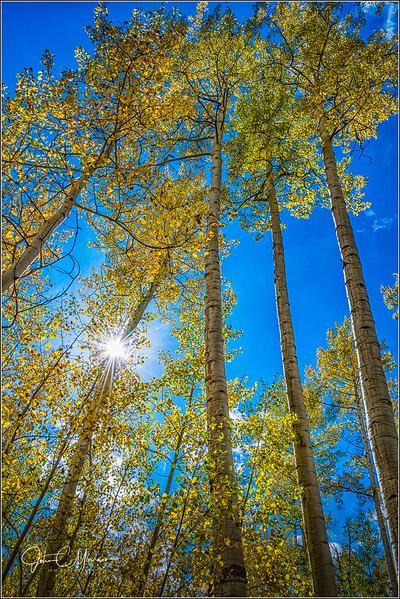 JM8_7813 Aspen sunstar LPN.jpg