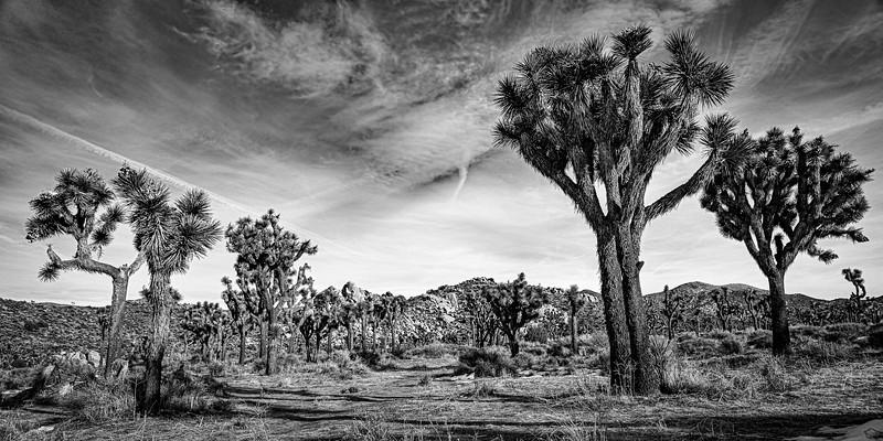 Joshua Tree-0083-Sliver.jpg