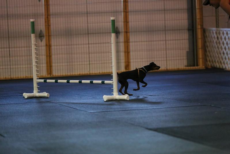dogs_06142016-70.jpg
