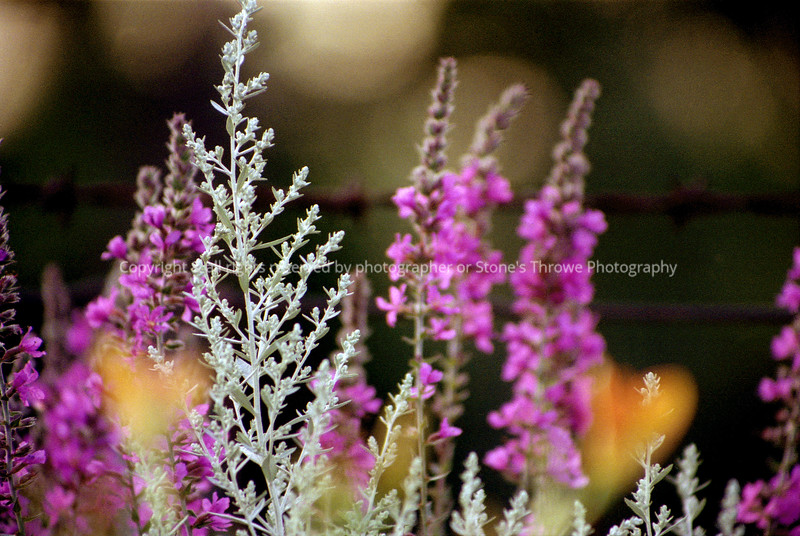 017-garden-lucas-apr04-0005