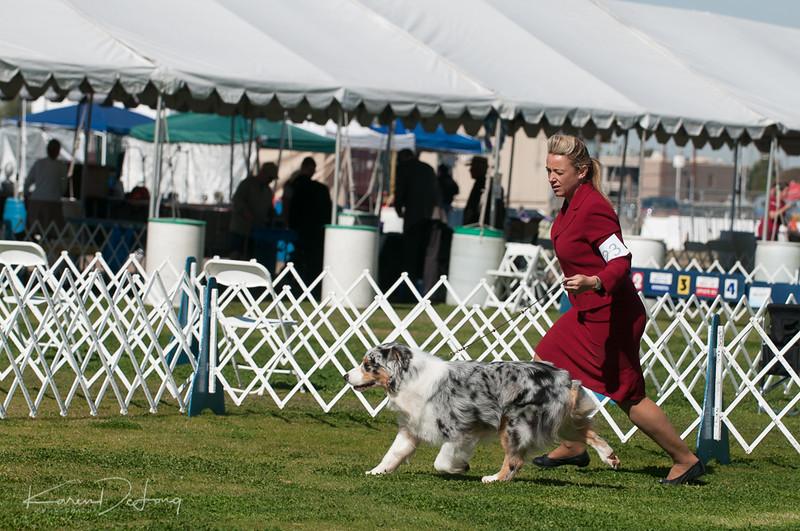 20170205_Australian Shepherds_Lost Dutchman Kennel Club-180.jpg