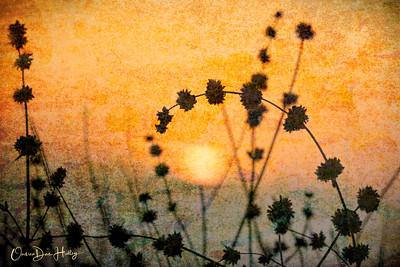 sun up; sun down