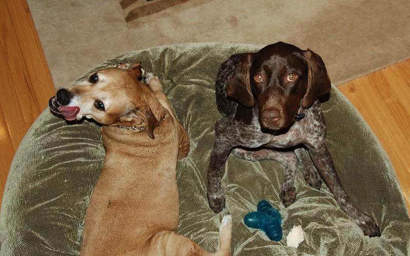 Moe & Morgen on dog bed.jpg