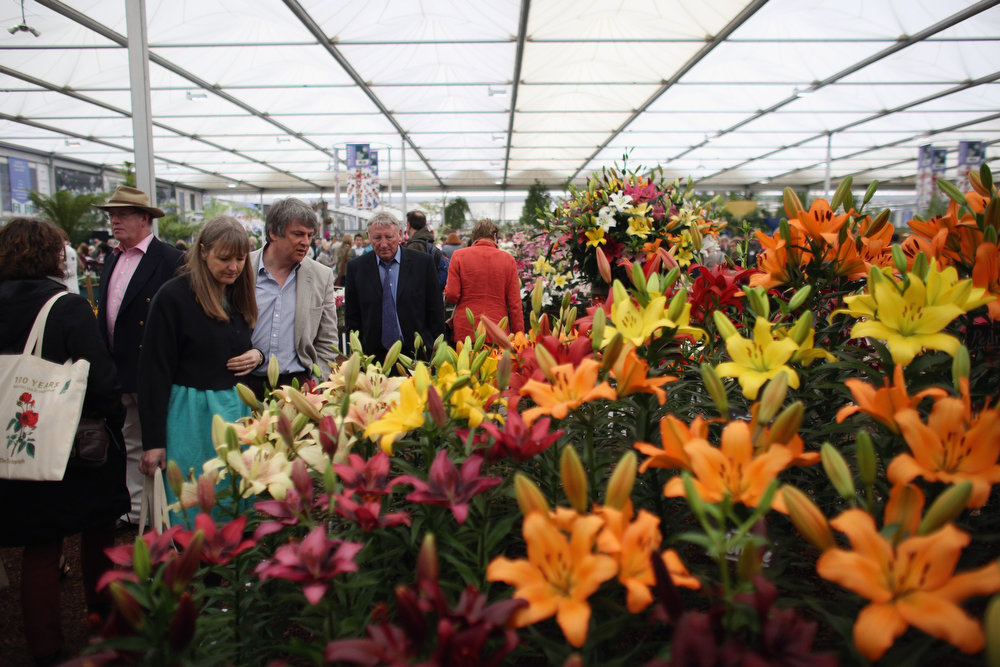 . Visitors admire lilium on display in The Great Pavilion at the RHS Chelsea Flower Show on May 21, 2013 in London, England. The Chelsea Flower Show run by the RHS celebrates its 100th birthday this year.  (Photo by Oli Scarff/Getty Images)