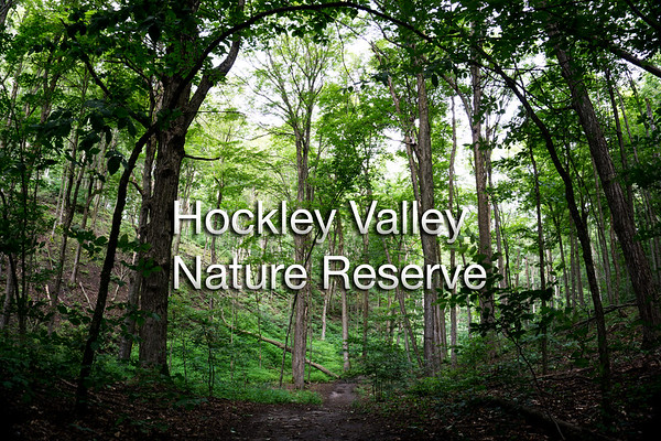 Hockley Valley Nature Reserve