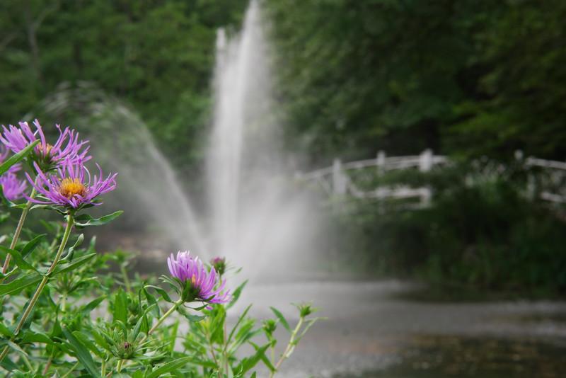 Sayen flowers and fountain.jpg