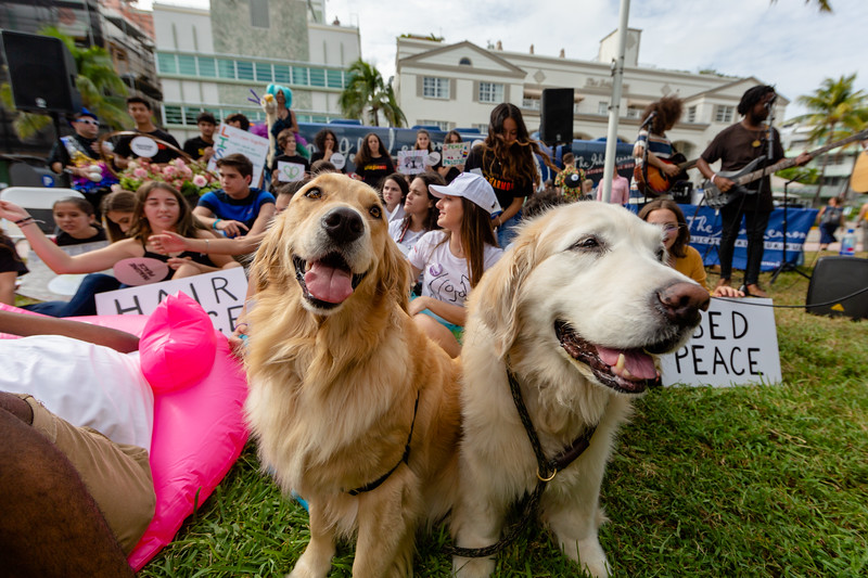 2018_11_03, Beach, Beach Bed In, Bed In, Bed In on the Beach, Blac Rabbit, Bus, Come Together, Come Together Miami, Dog, Exterior, FL, Florida, Lauryn Lima, Miami, Miami Beach, The Betsy, The Betsy Hotel