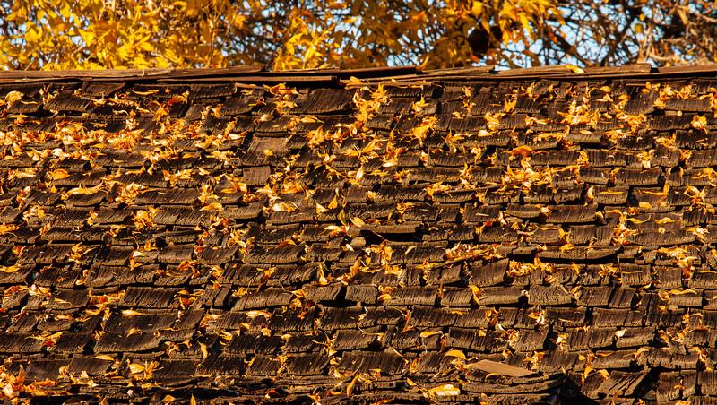 Leaves on Roof, San Jose, California, 2009