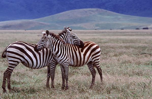 Safari, Kenya