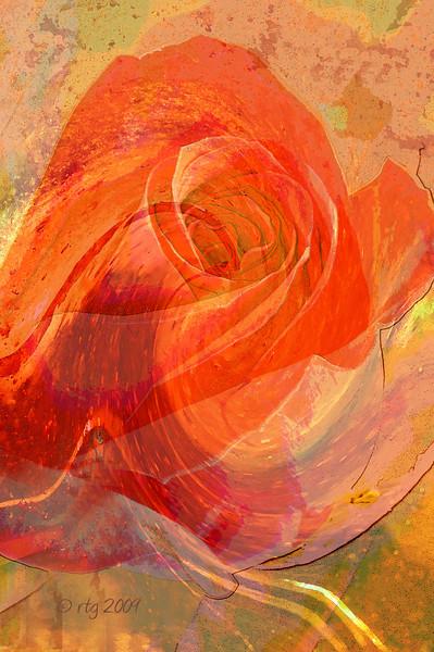 FlowerArt_Rose_0581.jpg