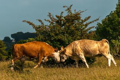 Animals RC and Minchinhampton Common