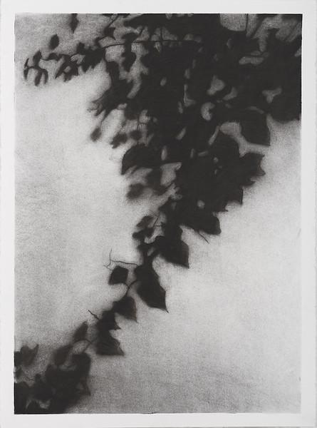 Shadow Leaves #1