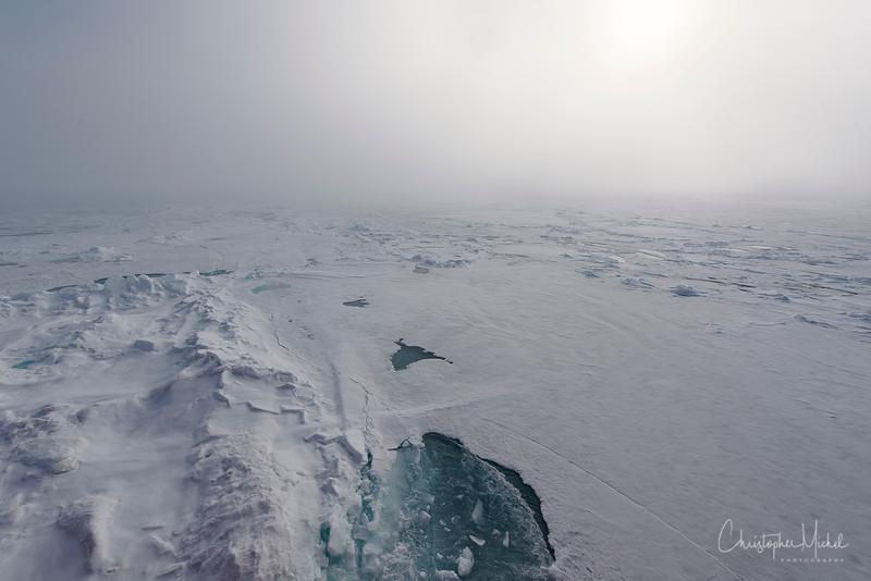 150630_Polar Bear at dShip_9514.jpg