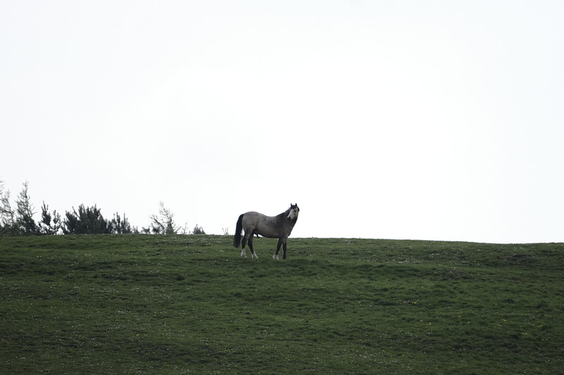 Scottish Borders countryside at Whytebank, GALASHIELS, UK.