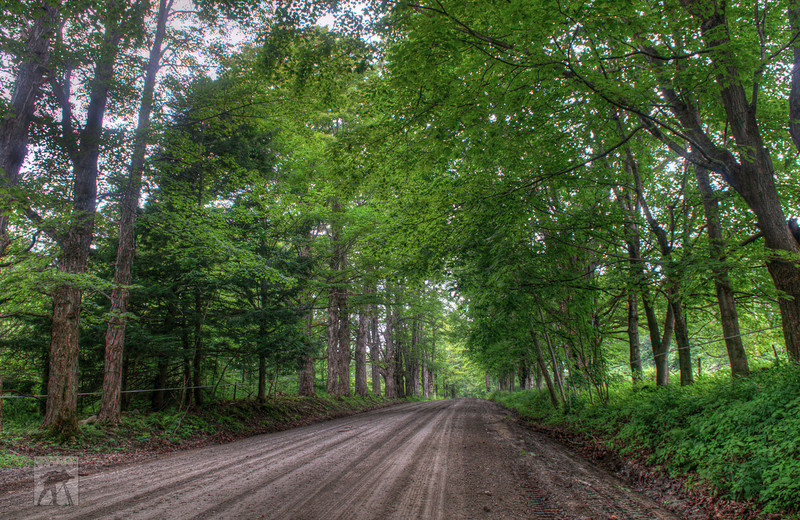 302 Tree Lined Road LoRes.jpg