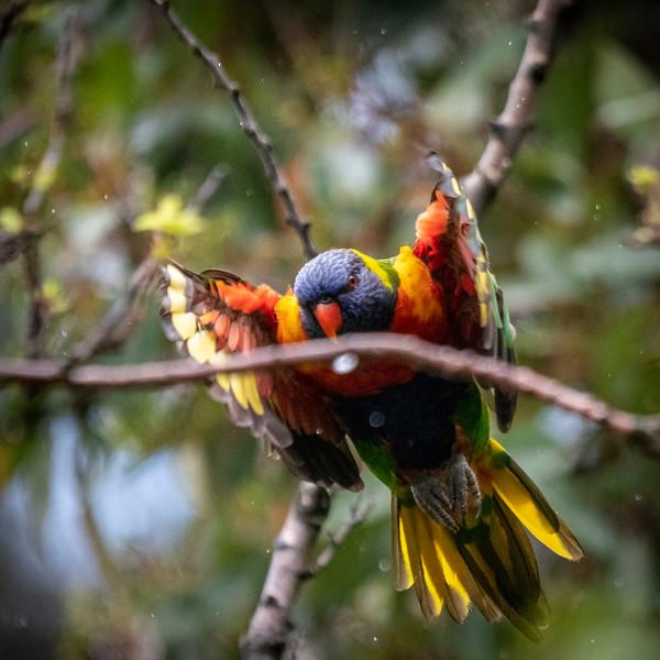 121818  birds  _17.JPG