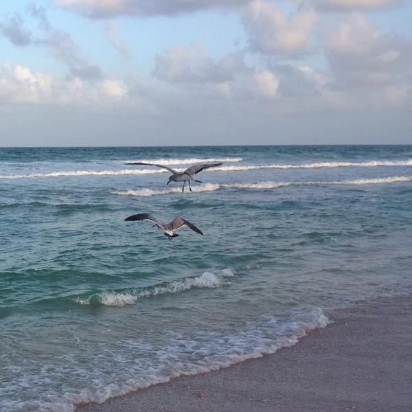 Birds battling for bait