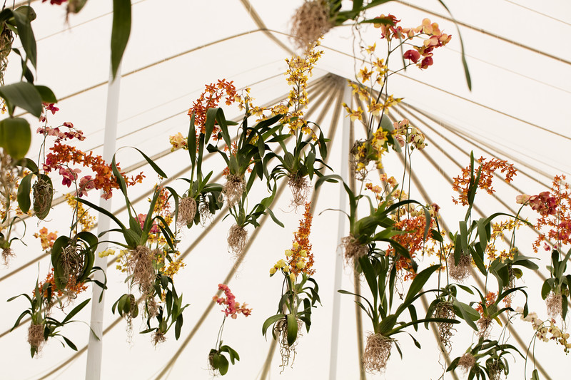 Hanging orchids decorations in the auction tent. Photo ©2017 by Jason Tinacci / Napa Valley Vintners