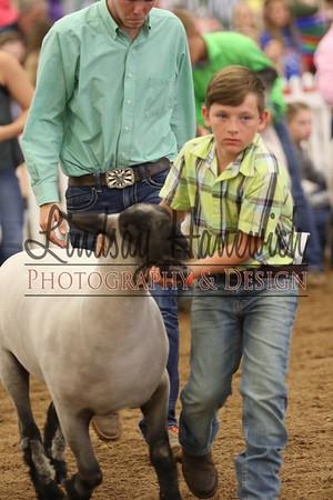 Ringshots - Class 18-Champion Yearling Ewe