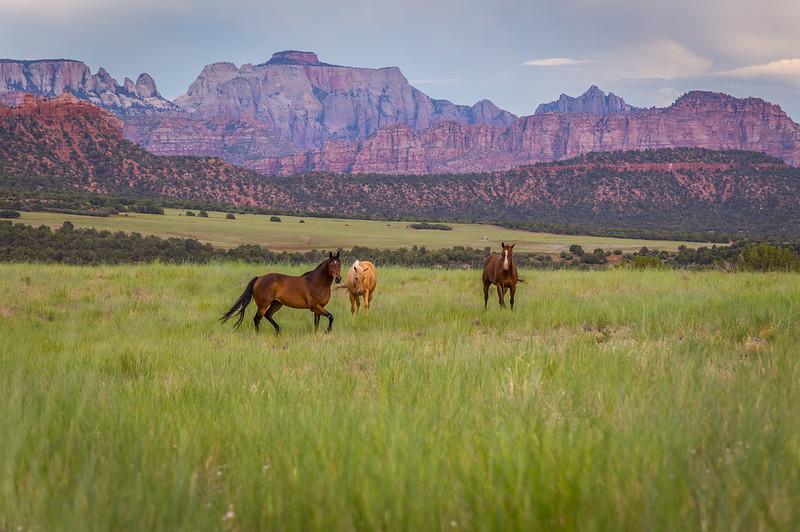 Smith Mesa Horses