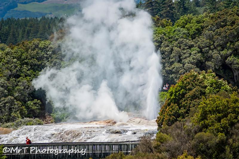 Erupting geyser Te Puia