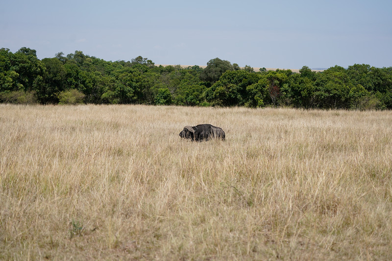 safari-2018-53.jpg