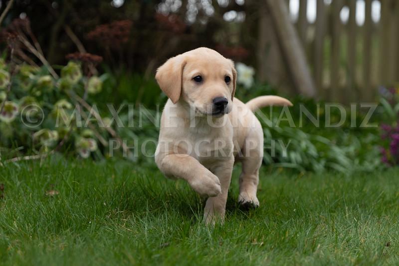 Weika Puppies 24 March 2019-8639.jpg