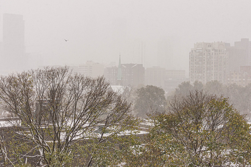 First Snow, November 2019