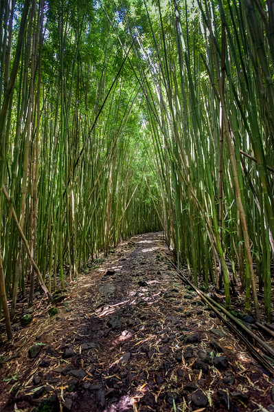 Deep in the Bamboo Forest on Maui, Hawaii