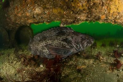 Edmonds Underwater Park 2017-03-12