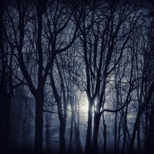Forest Sunset (monochrome)