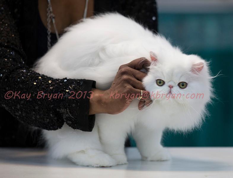CatShow2014067_1.jpg