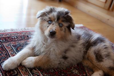 Kleiner Hund ändert die Welt