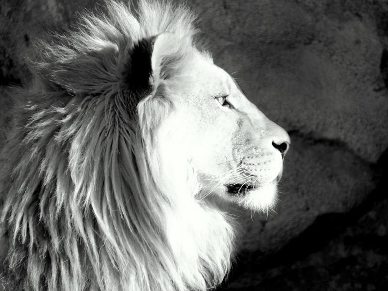 Denver Zoo 2018 (3518).JPG