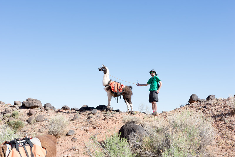Llamas2018jbc-103.jpg