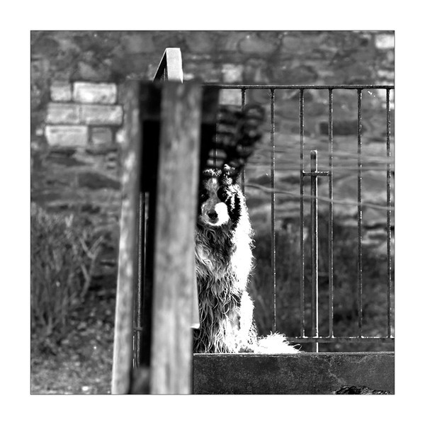 Wet Dog - Peebles - Observational