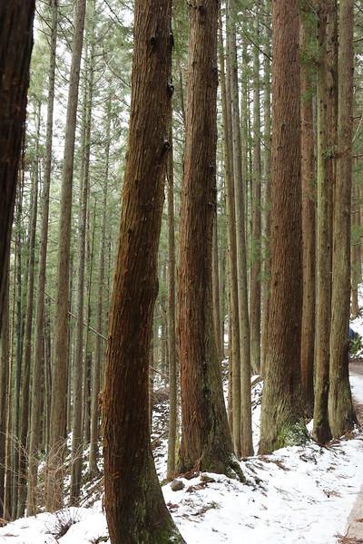 "Jigokudani Forest...home of the ""snow monkeys"""