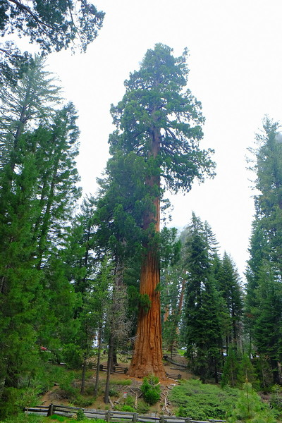 California Day 6 Sequoia 05-30-2017 62.JPG