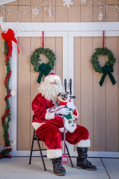 Pet Pictures With Santa-32.jpg