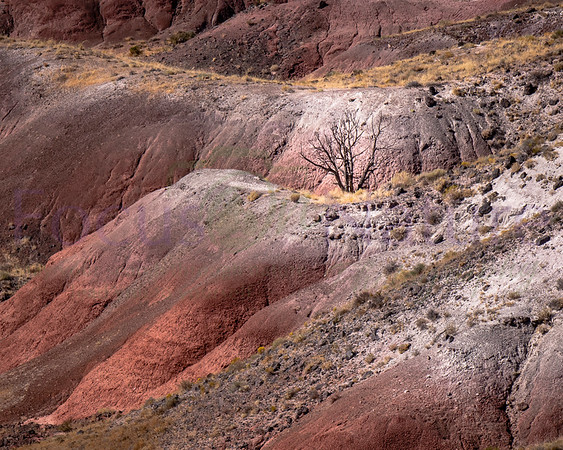 Petrified Forest-Painted Desert NP Gallery