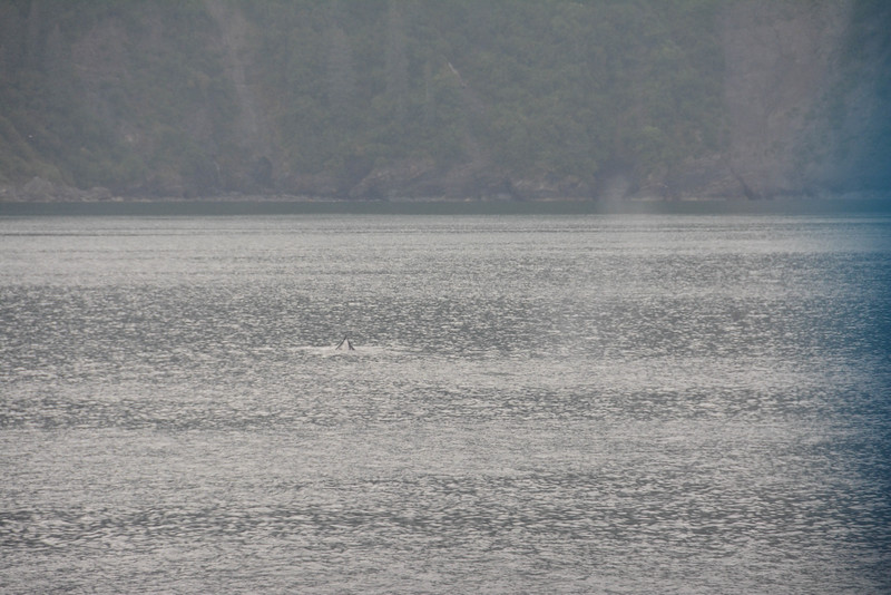 Kenai-Fjords-40.jpg