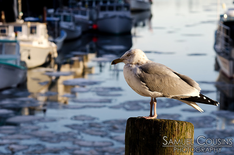 A seagull resting on a pile